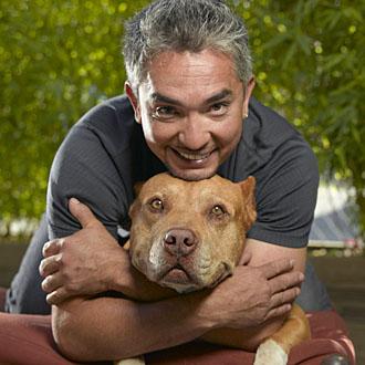 mannen som pratar med hundar